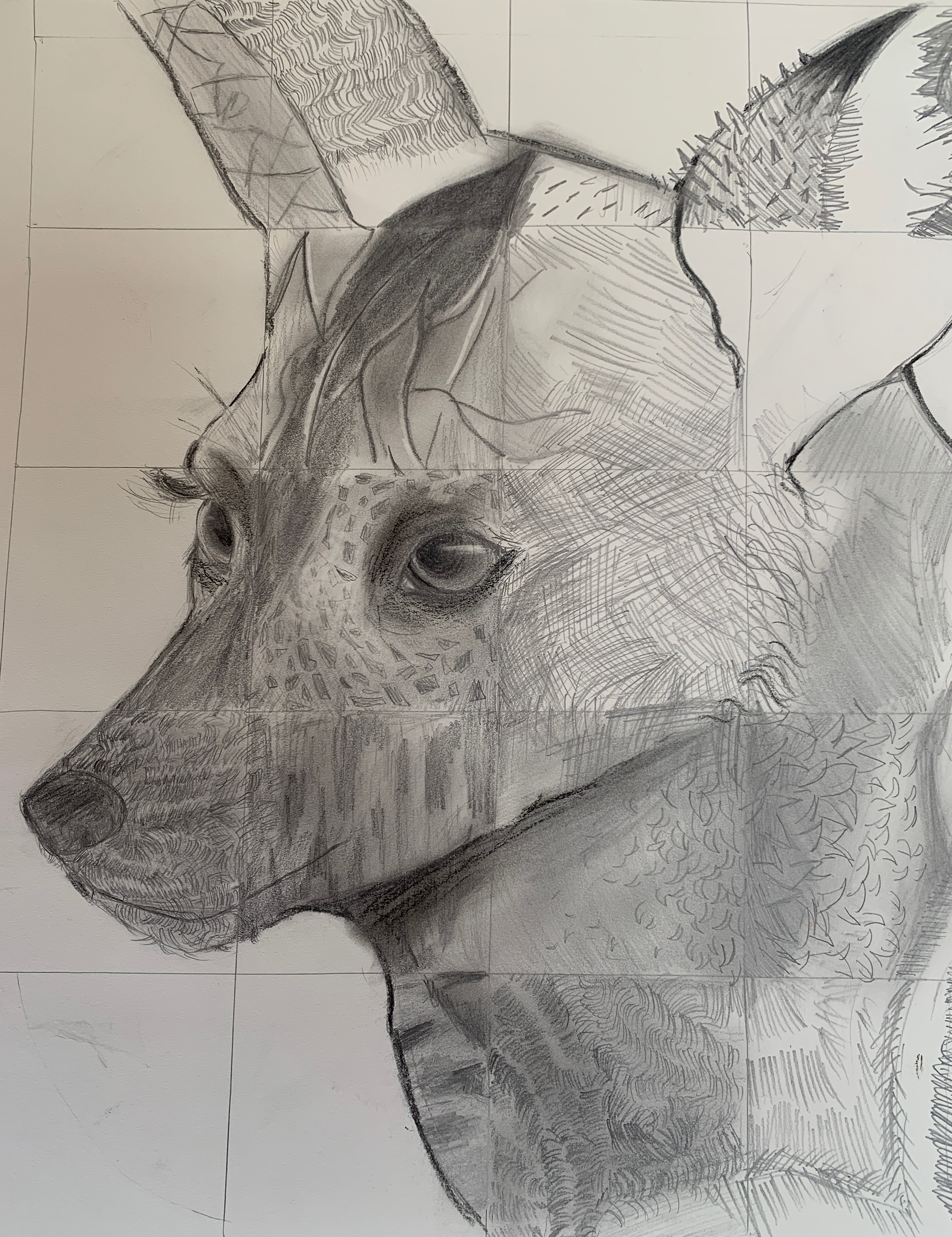 1st. Dylan Gibson, African Wild Dog