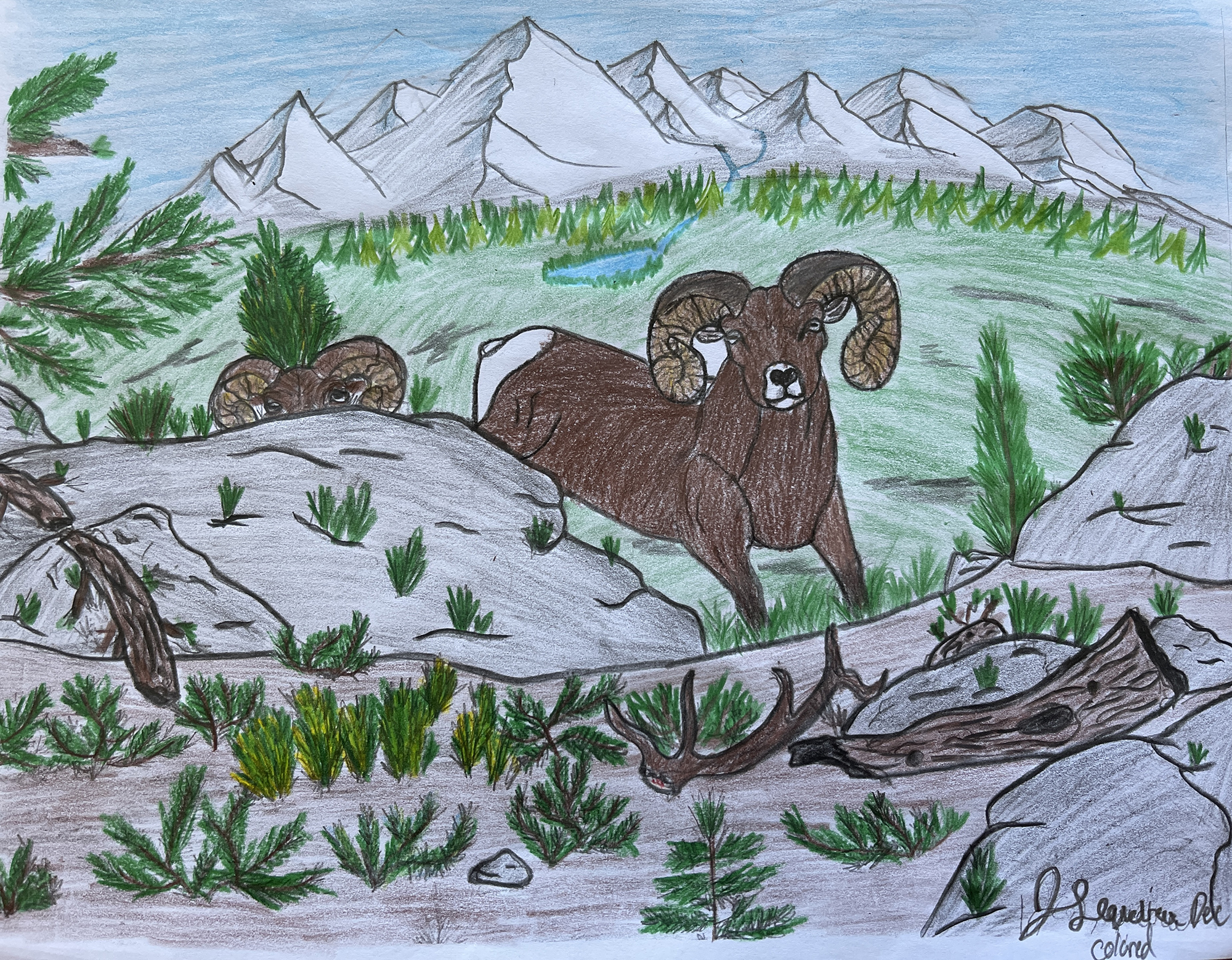 1st. Jack Sequeira, Animal Drawing