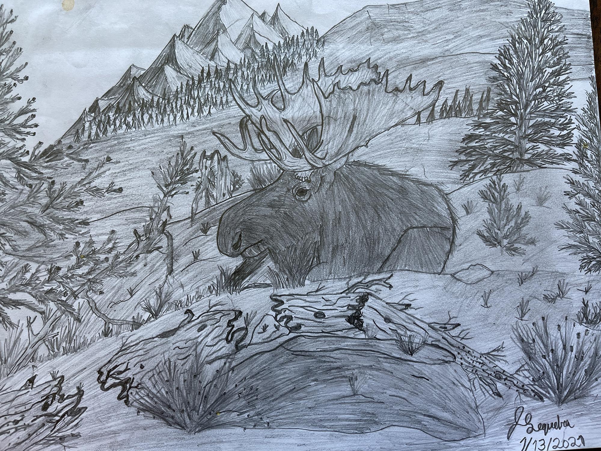 1st. Jack Sequeira, Animal Landscape Drawing