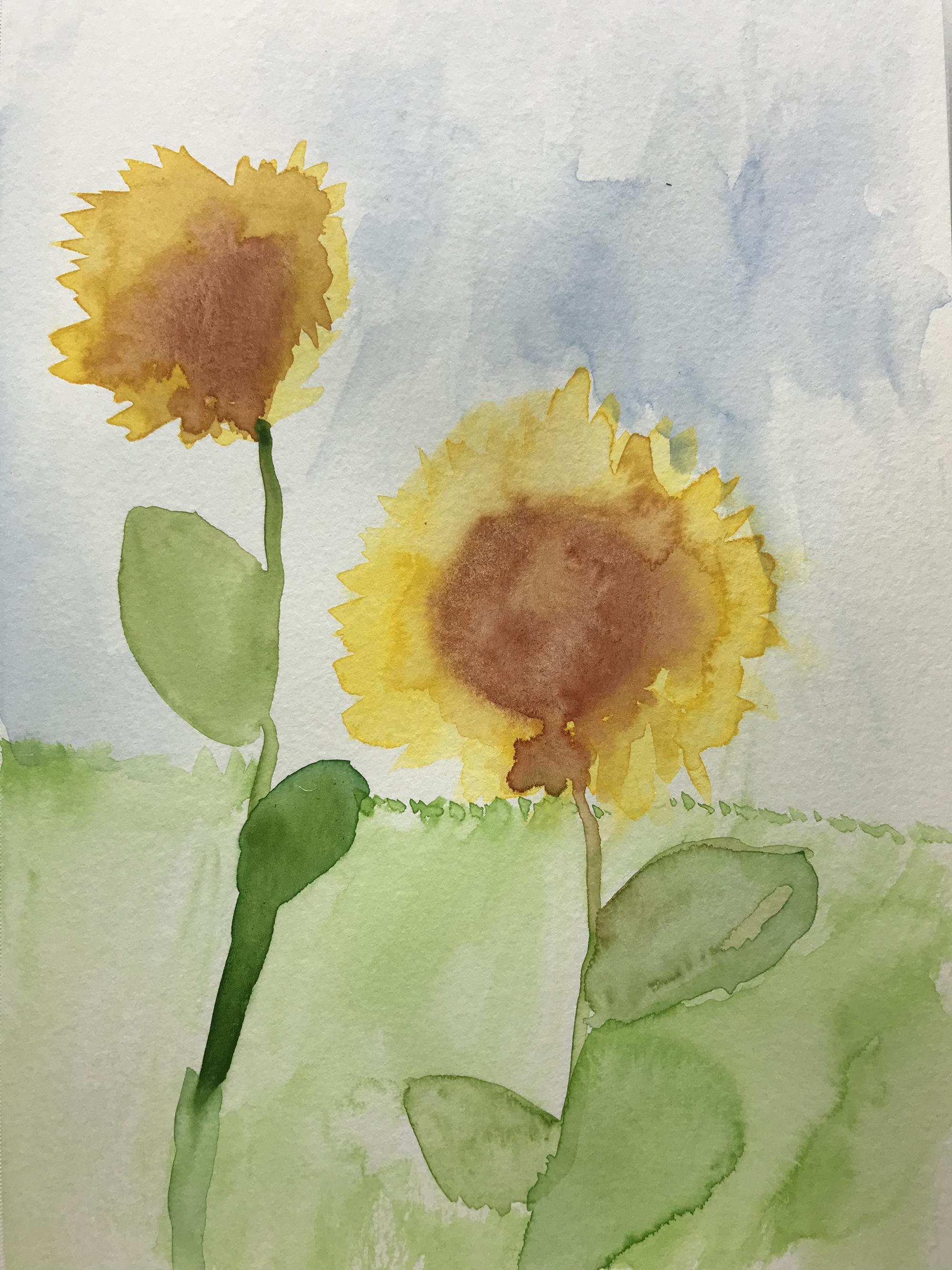 1st. Oliver Stadtner, Sunflowers