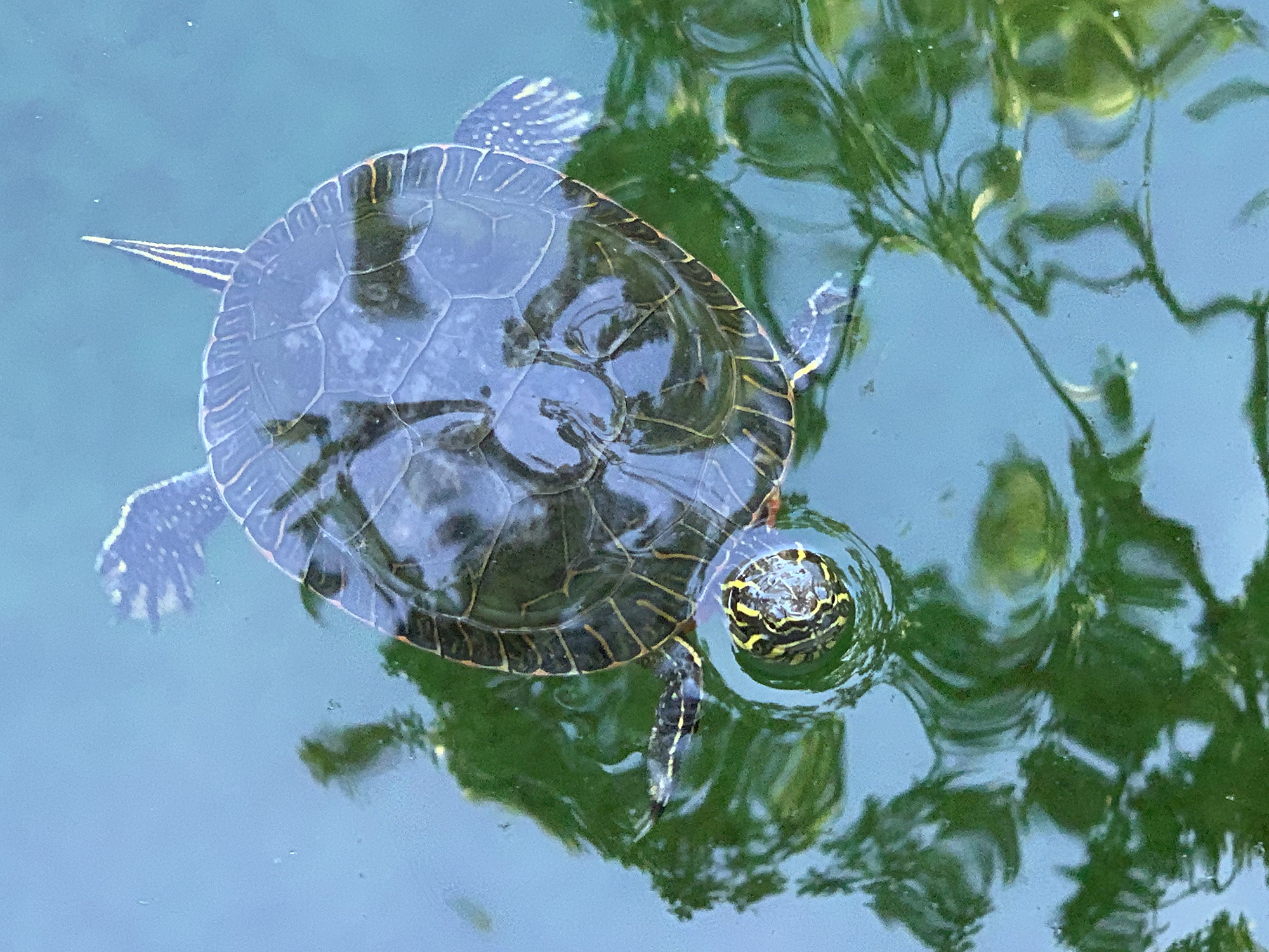 Award of Excellence. Kelly DAmbrosia, Turtle Reflections