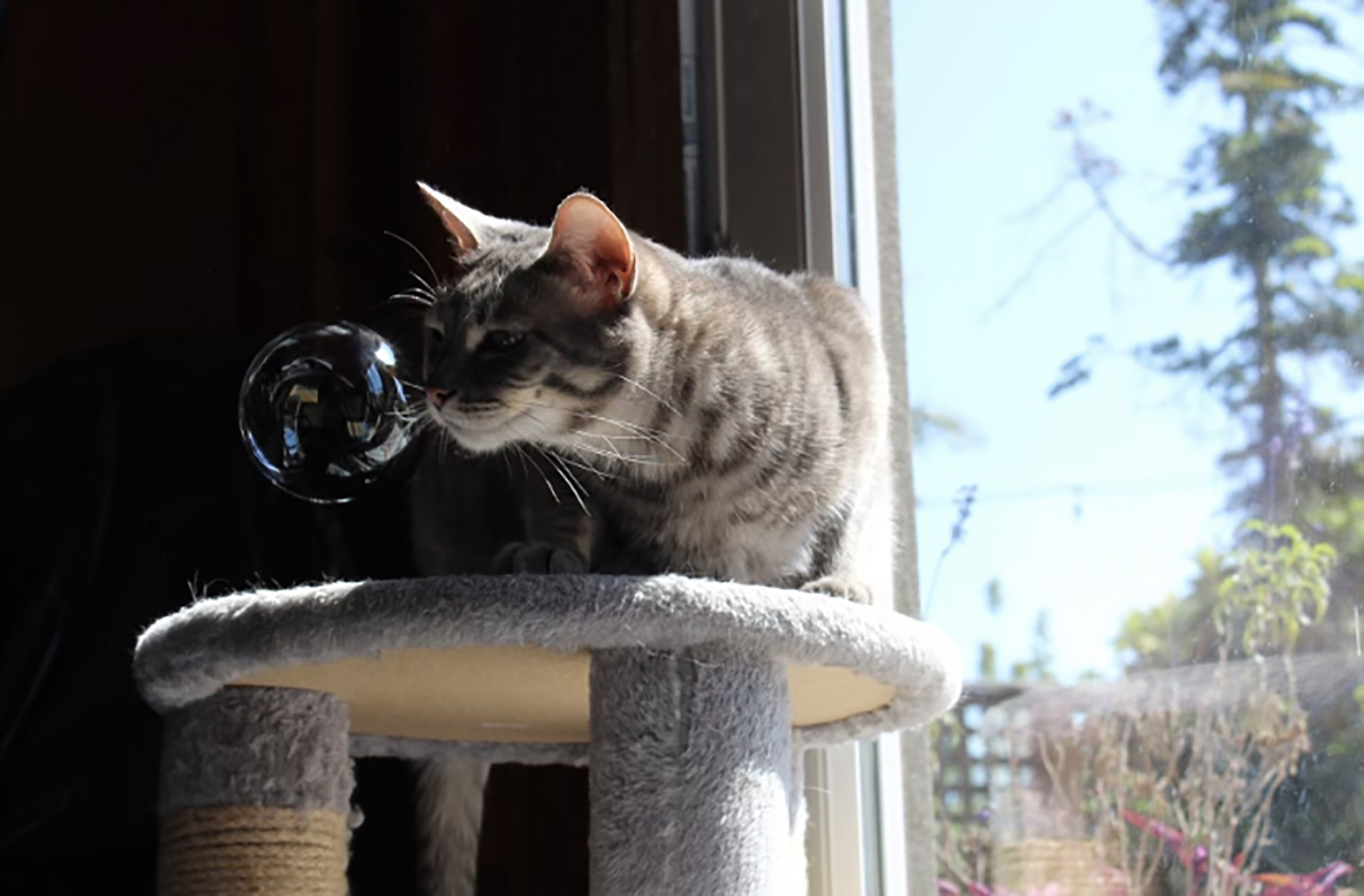 2nd. Callie June, cat with a bubble