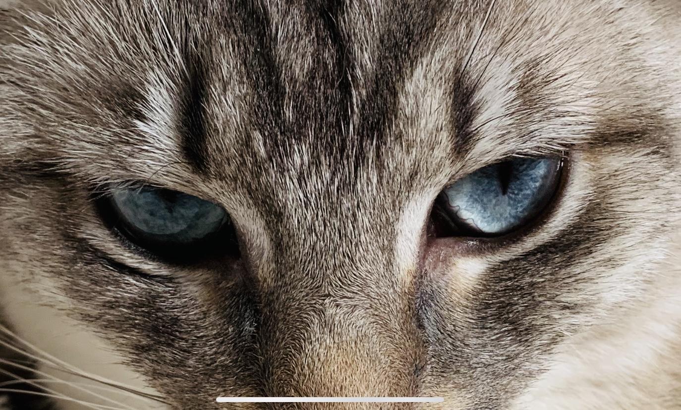 2nd. Caitlin Bain, Racheal's mesmerizing eyes