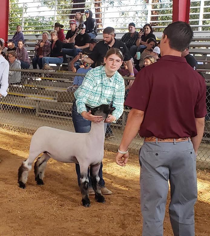 1st. Reisa Paulsey, Sheep Showmanship