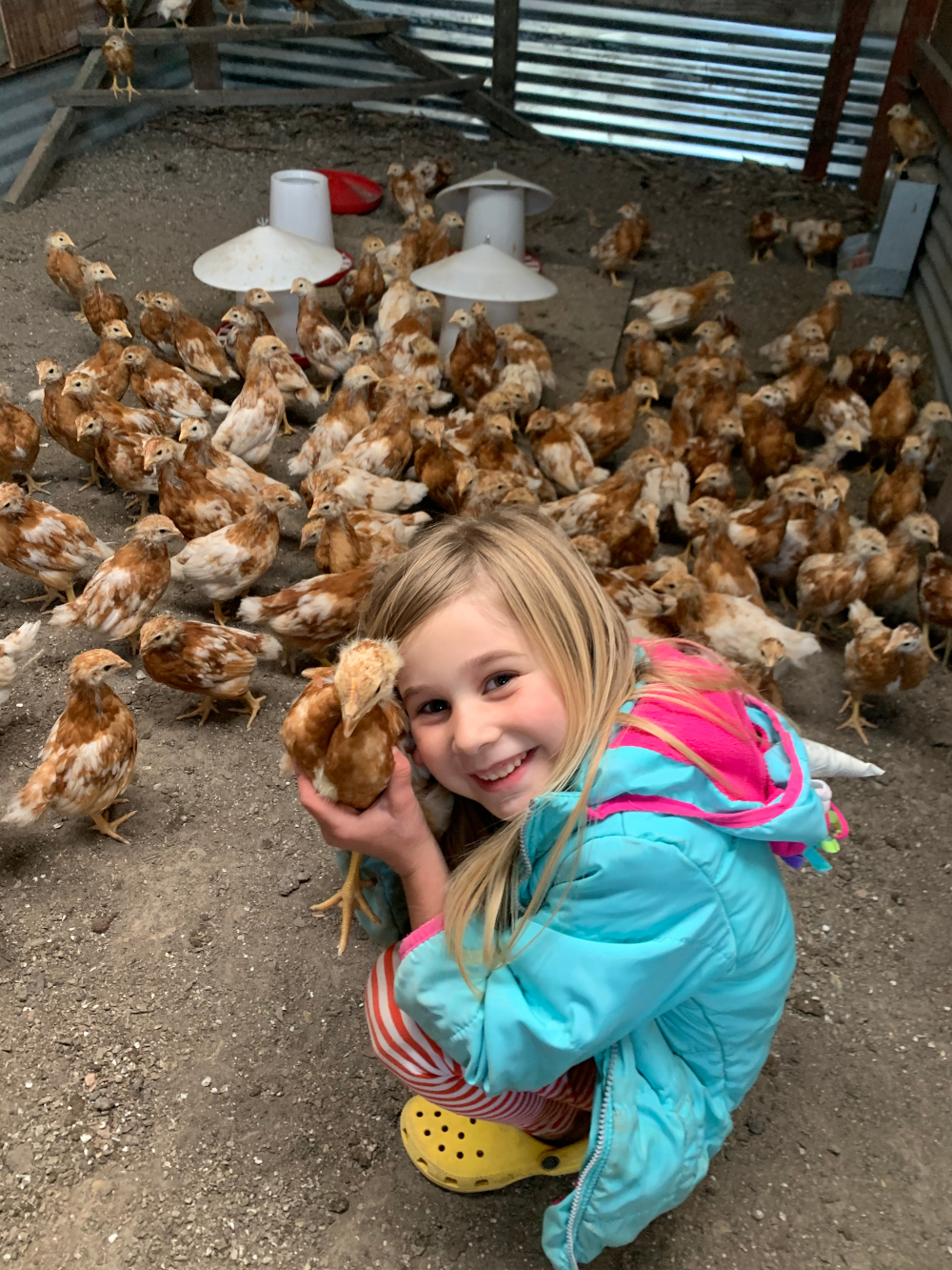 1st. Trudy Bruhn_helping take care of baby chicks and hens 1