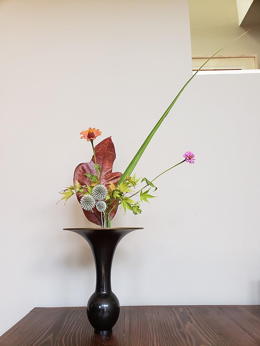 BOS 1st. Cynthia Miyashita, Flax, dahlia rikka shimputai