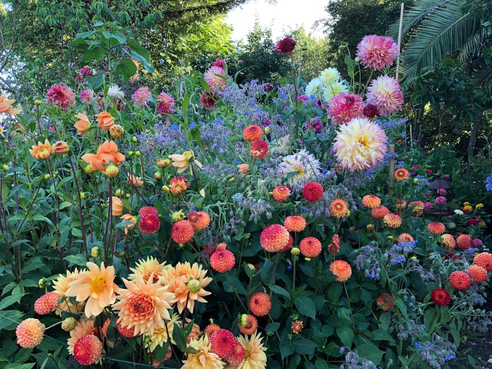 BOS 1st. Allison Krivoruchko, Garden