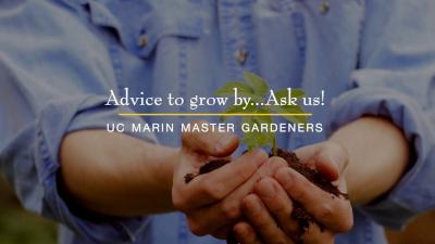 Marin Master Gardeners: Advice to Grow By