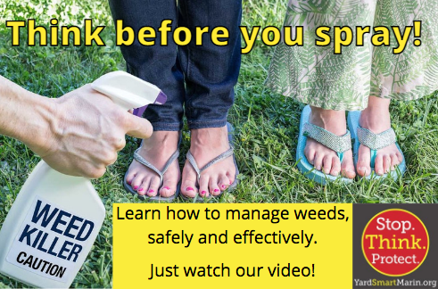 Managing Weeds Safely and Effectively